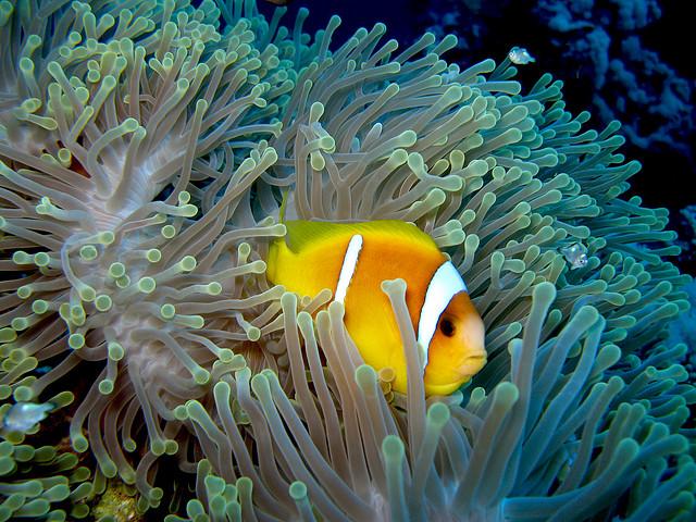 plongee-sous-marine-mer-rouge