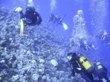 04_mangrove_bay_008_groupe_de_plongeurs.jpg_backup